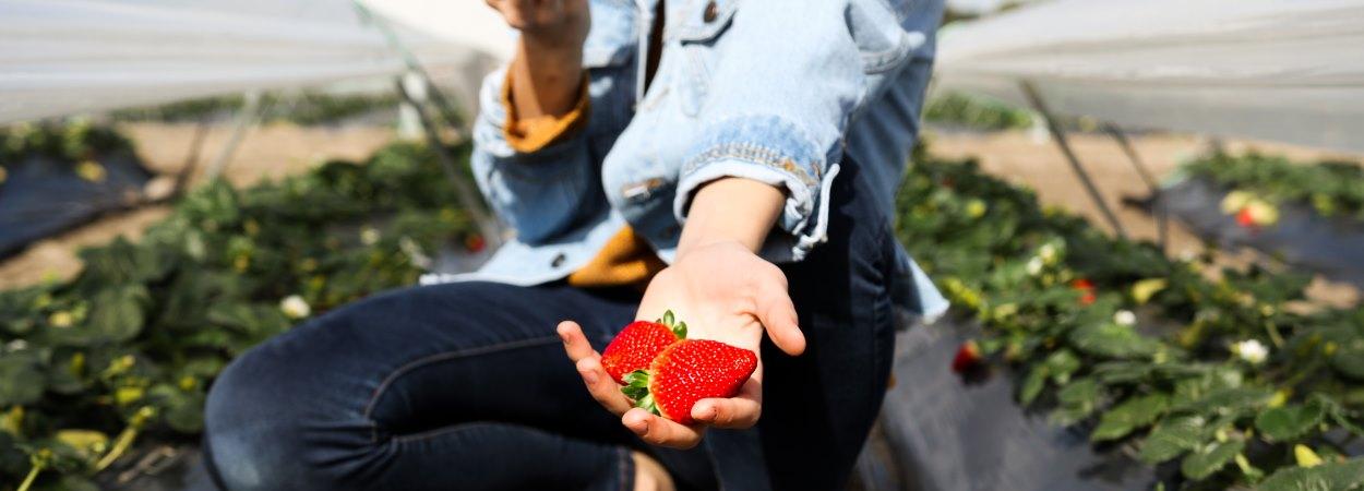 Heavenly Premium Fruit