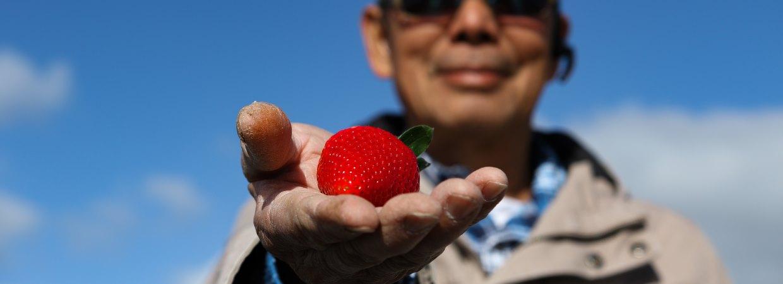 Heavenly strawberries | Quality Produce International